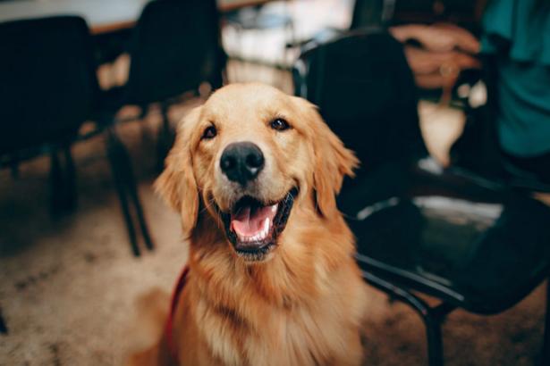 Best Pet Shops in Washington