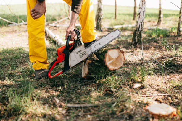 Best Tree Services in Memphis