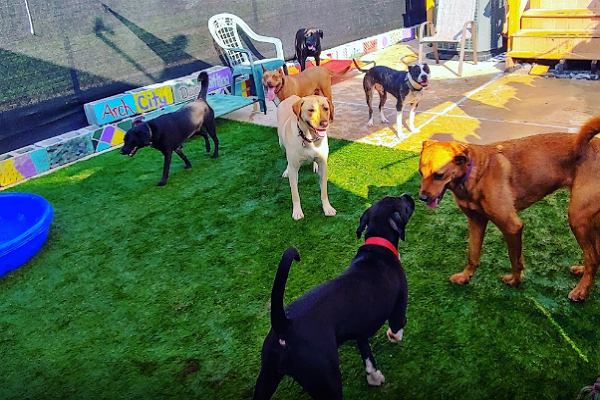 Doggy Day Care Centre in St. Louis