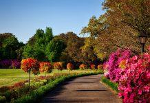 Best Parks in San Antonio, TX