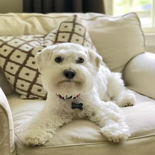 Dog Grooming in Atlanta