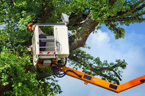Top Tree Services in Albuquerque