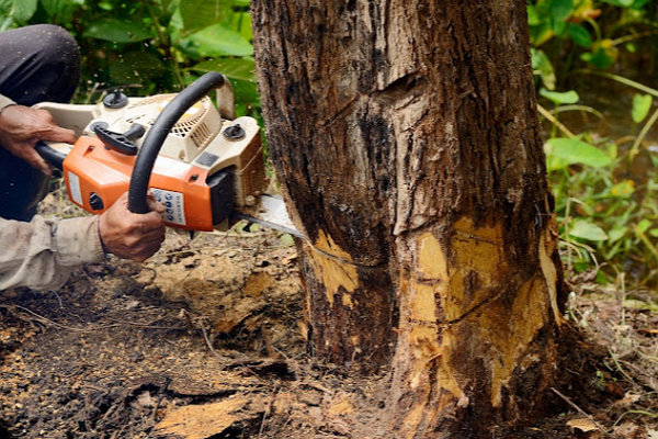One of the best Tree Services in Albuquerque