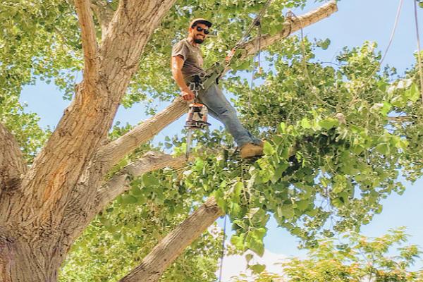 Good Tree Services in Albuquerque