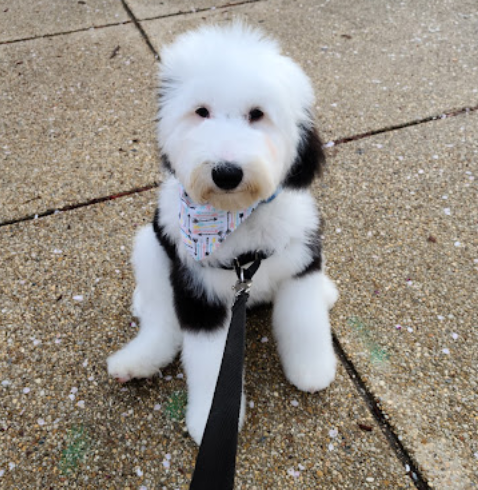 Top Dog Grooming in Washington