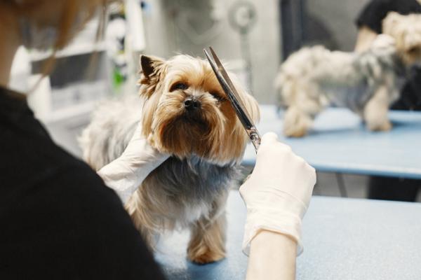 Dog Grooming in Albuquerque