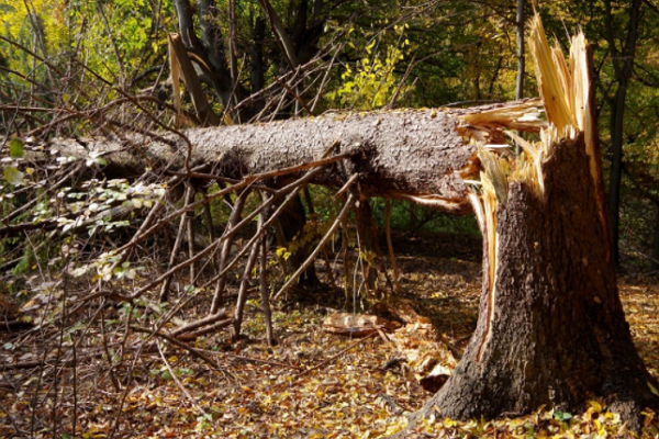 Top Tree Services in Memphis