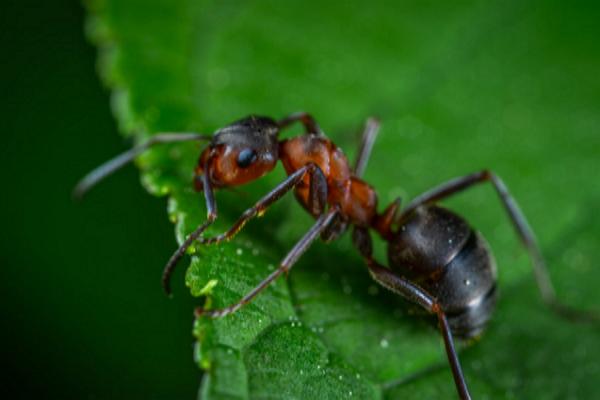 Top Pest Control Companies in El Paso