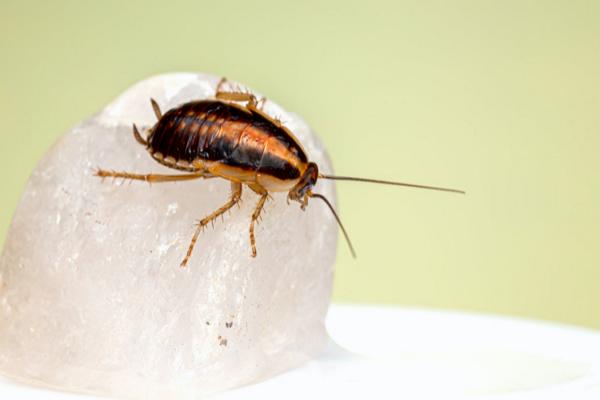 Pest Control Companies in El Paso
