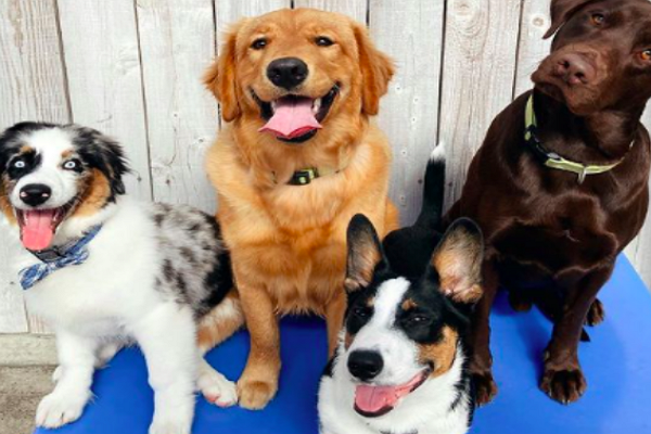 Doggy Day Care Centre in Sacramento