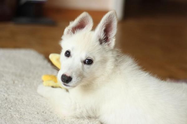 Top Pet Shops in Washington