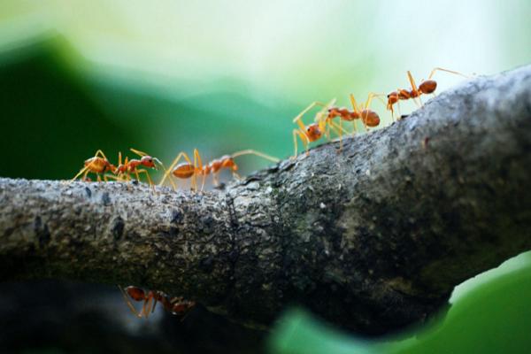 Top Pest Control Companies in Portland