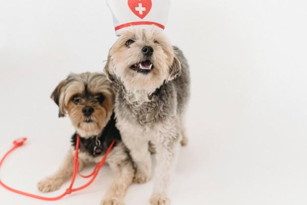 Good Pet Care Centre in St. Louis