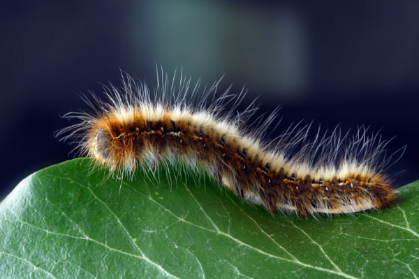 Pest Control Companies in Fresno