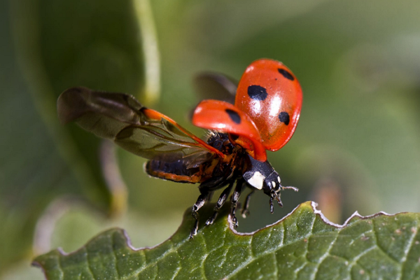 Good Pest Control Companies in Fresno