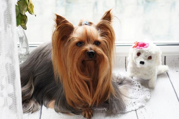Dog Grooming in Boston