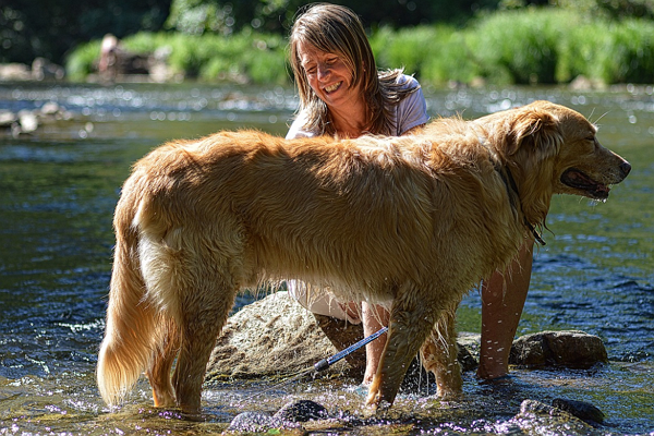 Dog Grooming Boston