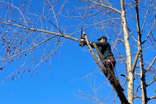 Arborists in Milwaukee