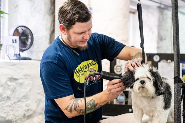 Dog Grooming St. Louis