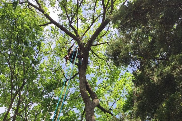 One of the best Tree Services in Memphis