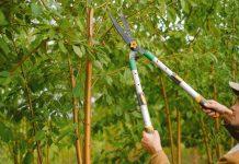Best Arborists in Baltimore, MD