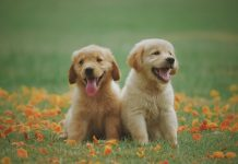 5 Best Doggy Day Care Centers in Oklahoma City, OK
