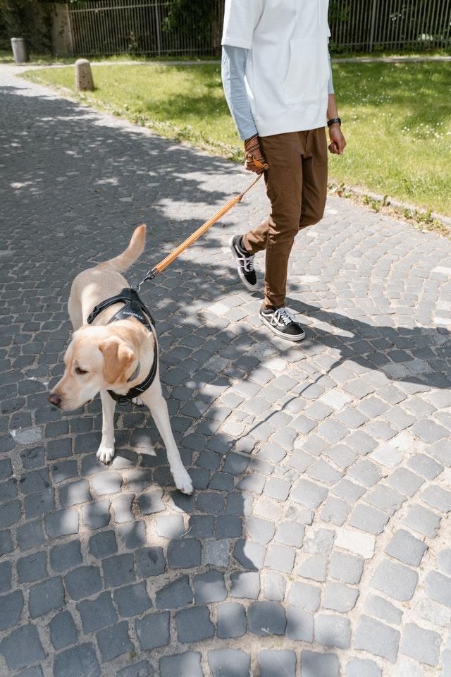 Dog walkers in Albuquerque