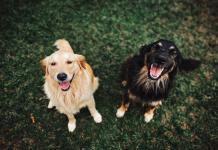 Best Dog Grooming in Sacramento