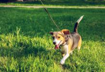 Best Dog Walkers in Denver