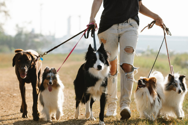 Best Dog Walkers in Oklahoma City