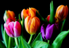 Best Florists in Atlanta