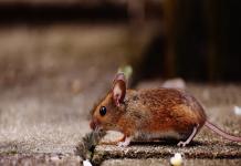 Best Pest Control Companies in Sacramento