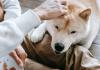 Best Pet Care Centre in Boston
