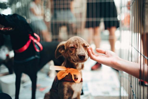 Best Pet Shops in St. Louis