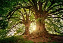 Best Tree Services in Sacramento