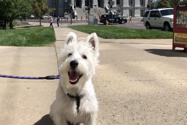 Good Dog Walkers in Denver