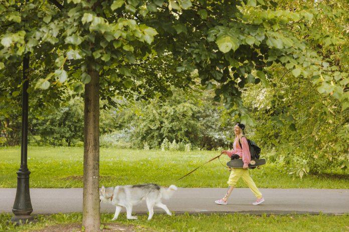 Best Dog Walkers in Louisville, KY