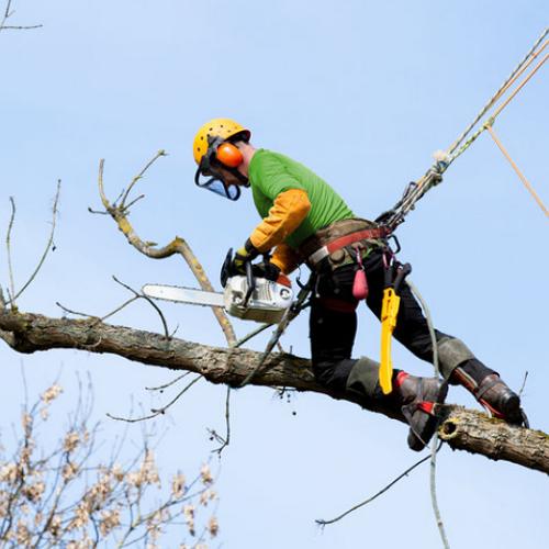 Tree Services Nashville