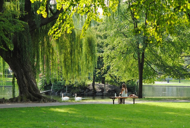 Charles River Reservation in Boston, MA