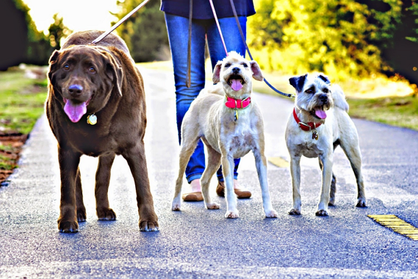 Dog Walkers in Oklahoma City
