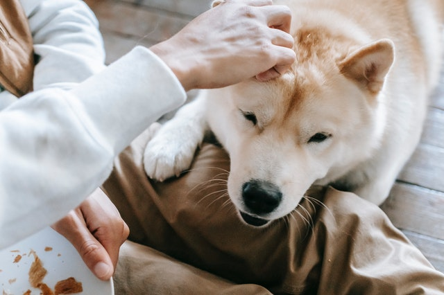 5 Best Doggy Day Care Centres in Louisville, KY