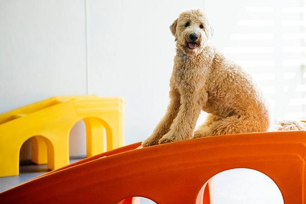 Doggy Day Care Centre in Albuquerque