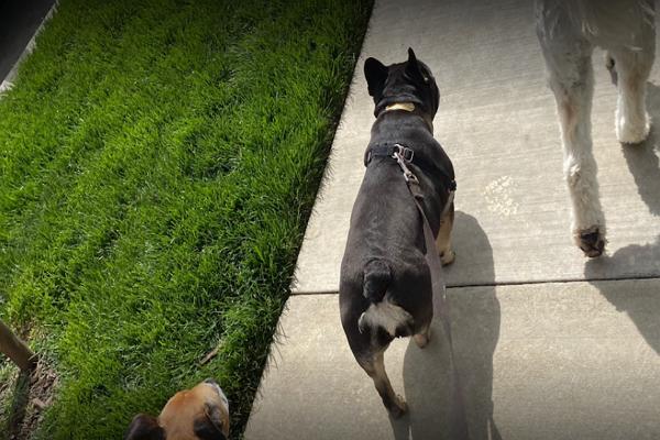 Dog Walkers in Sacramento