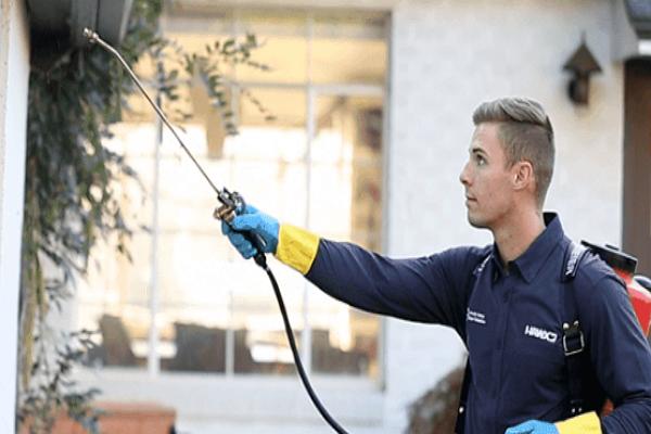 Good Pest Control Companies in Sacramento