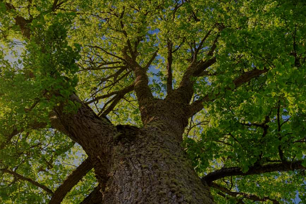 Tree Services in Nashville