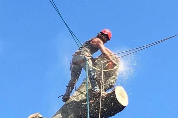 Good Tree Services in Nashville