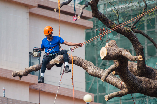 Top Tree Services in Nashville