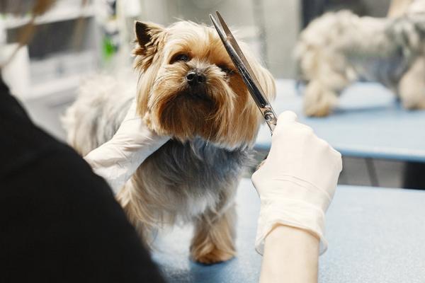 Good Pet Care Centre in Boston