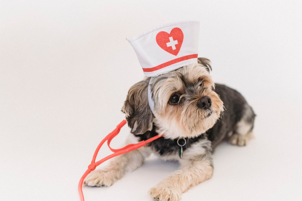One of the best Pet Care Centre in Boston