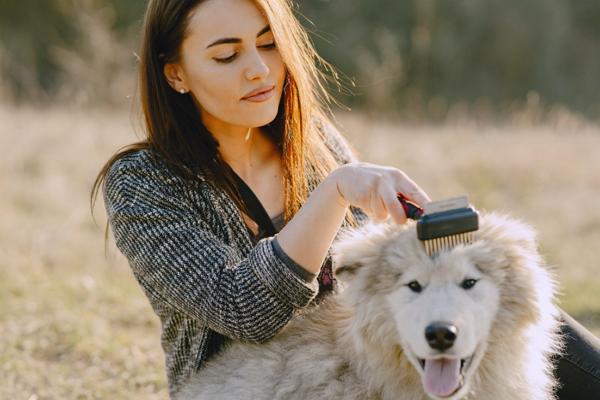 Dog Grooming Sacramento